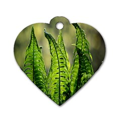 Fern Ferns Green Nature Foliage Dog Tag Heart (Two Sides)