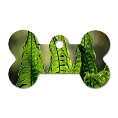 Fern Ferns Green Nature Foliage Dog Tag Bone (One Side)
