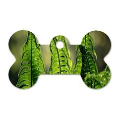 Fern Ferns Green Nature Foliage Dog Tag Bone (Two Sides)