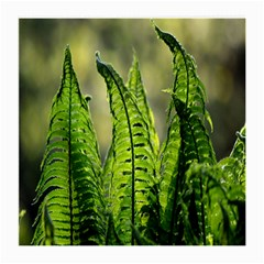 Fern Ferns Green Nature Foliage Medium Glasses Cloth (2-Side)