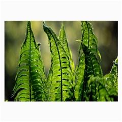 Fern Ferns Green Nature Foliage Large Glasses Cloth (2 Side)