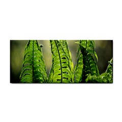 Fern Ferns Green Nature Foliage Cosmetic Storage Cases