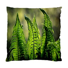 Fern Ferns Green Nature Foliage Standard Cushion Case (Two Sides)