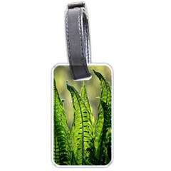 Fern Ferns Green Nature Foliage Luggage Tags (Two Sides)