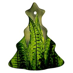 Fern Ferns Green Nature Foliage Christmas Tree Ornament (Two Sides)