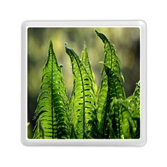 Fern Ferns Green Nature Foliage Memory Card Reader (Square)
