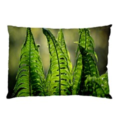 Fern Ferns Green Nature Foliage Pillow Case (Two Sides)