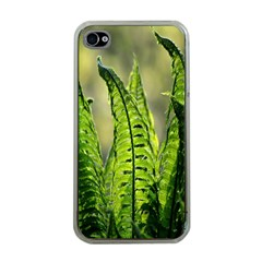 Fern Ferns Green Nature Foliage Apple iPhone 4 Case (Clear)