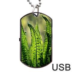 Fern Ferns Green Nature Foliage Dog Tag USB Flash (One Side)