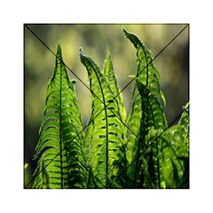 Fern Ferns Green Nature Foliage Acrylic Tangram Puzzle (6  x 6 )