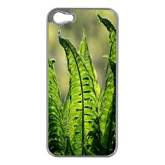 Fern Ferns Green Nature Foliage Apple iPhone 5 Case (Silver)