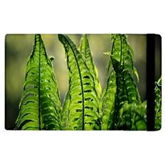 Fern Ferns Green Nature Foliage Apple iPad 2 Flip Case