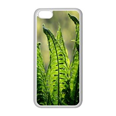 Fern Ferns Green Nature Foliage Apple iPhone 5C Seamless Case (White)