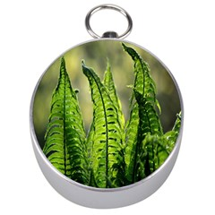 Fern Ferns Green Nature Foliage Silver Compasses