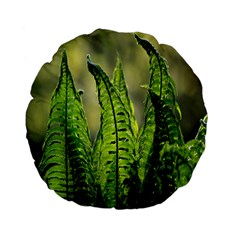 Fern Ferns Green Nature Foliage Standard 15  Premium Flano Round Cushions