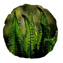 Fern Ferns Green Nature Foliage Large 18  Premium Flano Round Cushions