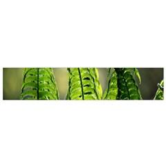Fern Ferns Green Nature Foliage Flano Scarf (Small)