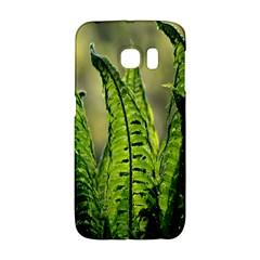 Fern Ferns Green Nature Foliage Galaxy S6 Edge