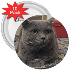 British Shorthair Grey 3  Buttons (10 pack)