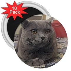 British Shorthair Grey 3  Magnets (10 pack)