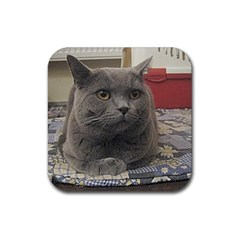 British Shorthair Grey Rubber Square Coaster (4 pack)