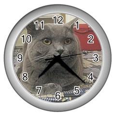 British Shorthair Grey Wall Clocks (Silver)