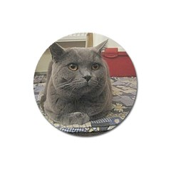 British Shorthair Grey Magnet 3  (Round)