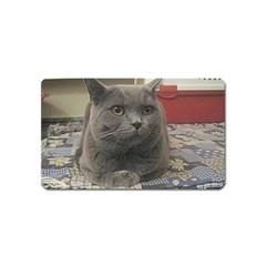 British Shorthair Grey Magnet (Name Card)