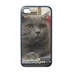 British Shorthair Grey Apple iPhone 4 Case (Black)