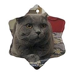 British Shorthair Grey Ornament (Snowflake)
