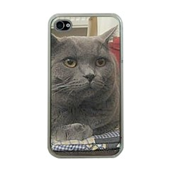 British Shorthair Grey Apple iPhone 4 Case (Clear)