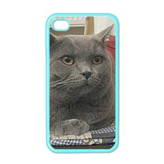 British Shorthair Grey Apple iPhone 4 Case (Color)