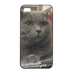 British Shorthair Grey Apple iPhone 4/4s Seamless Case (Black)