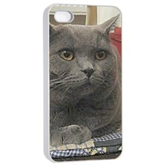 British Shorthair Grey Apple iPhone 4/4s Seamless Case (White)