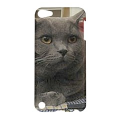 British Shorthair Grey Apple iPod Touch 5 Hardshell Case