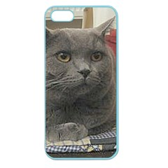 British Shorthair Grey Apple Seamless iPhone 5 Case (Color)