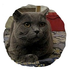 British Shorthair Grey Large 18  Premium Round Cushions
