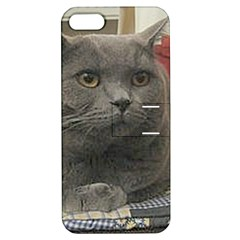 British Shorthair Grey Apple iPhone 5 Hardshell Case with Stand