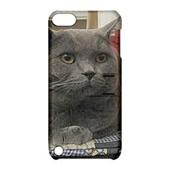 British Shorthair Grey Apple iPod Touch 5 Hardshell Case with Stand