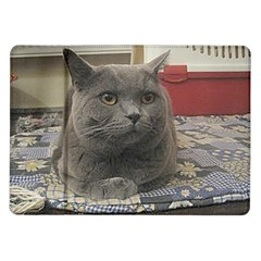 British Shorthair Grey Samsung Galaxy Tab 10.1  P7500 Flip Case
