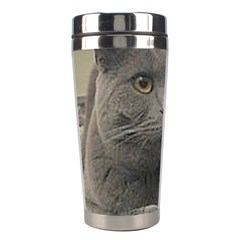 British Shorthair Grey Stainless Steel Travel Tumblers