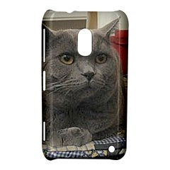 British Shorthair Grey Nokia Lumia 620