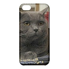 British Shorthair Grey Apple iPhone 5C Hardshell Case