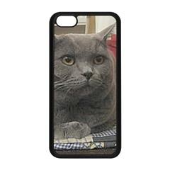 British Shorthair Grey Apple iPhone 5C Seamless Case (Black)