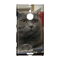 British Shorthair Grey Nokia Lumia 1520