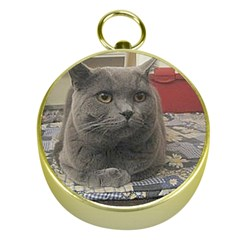 British Shorthair Grey Gold Compasses