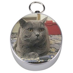 British Shorthair Grey Silver Compasses