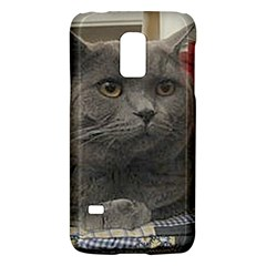 British Shorthair Grey Galaxy S5 Mini