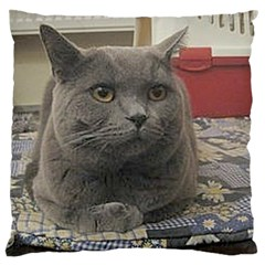 British Shorthair Grey Large Flano Cushion Case (Two Sides)