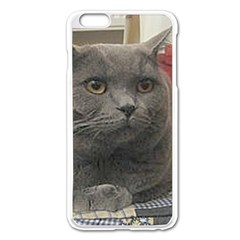 British Shorthair Grey Apple iPhone 6 Plus/6S Plus Enamel White Case